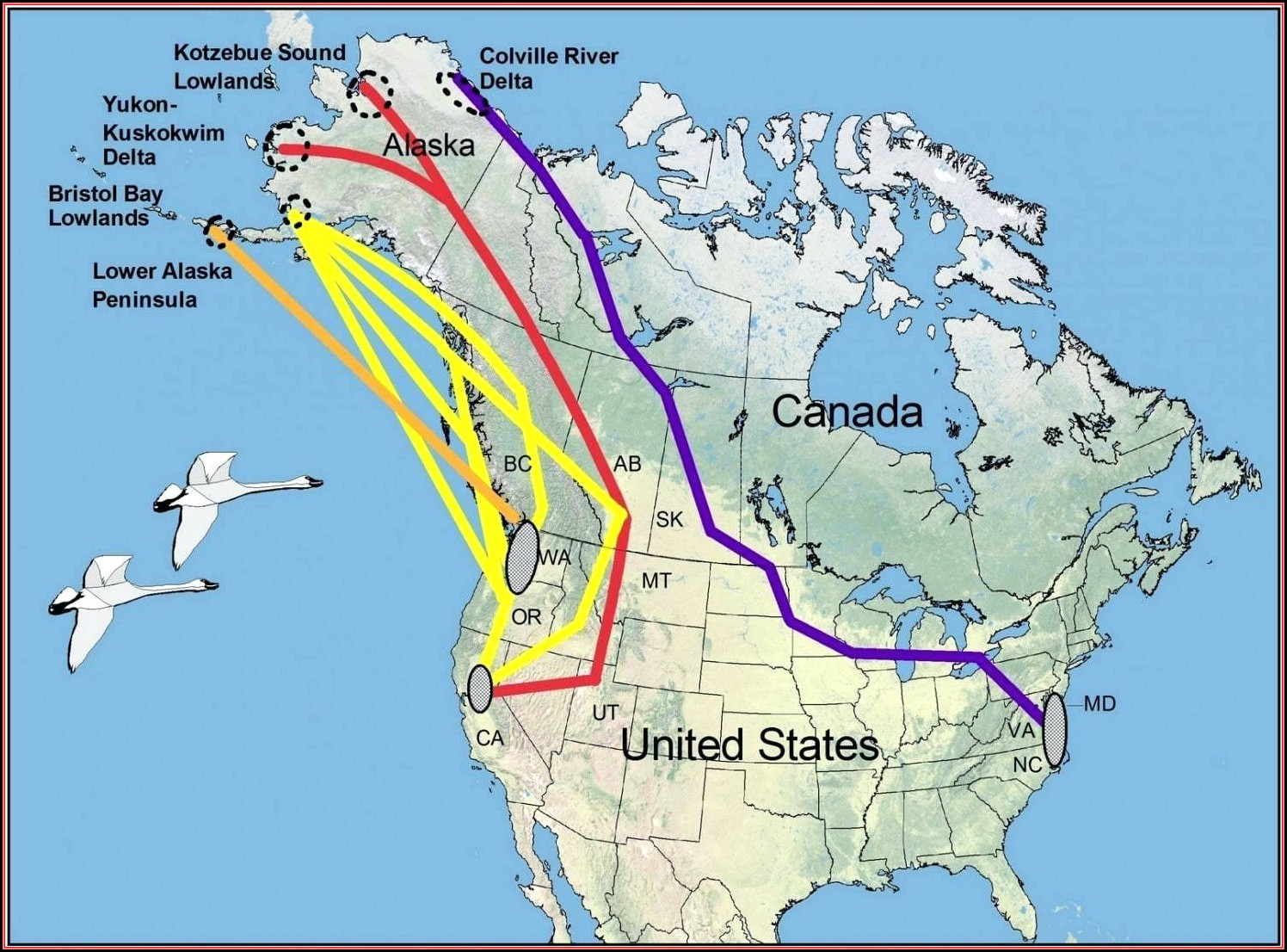 Bird Migration Map North America