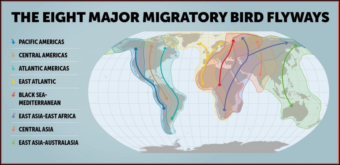 Bird Migration Maps North America