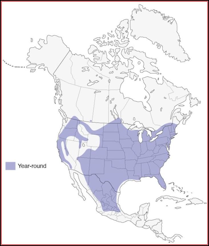 Bird Range Maps North America