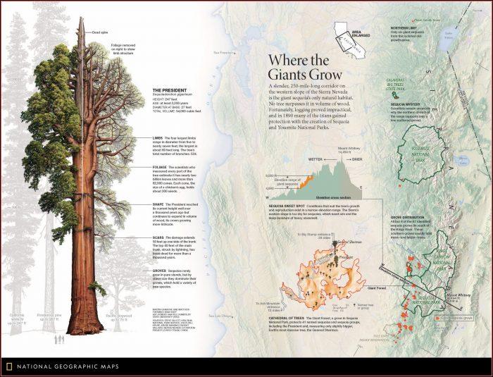 Giant Sequoia Map