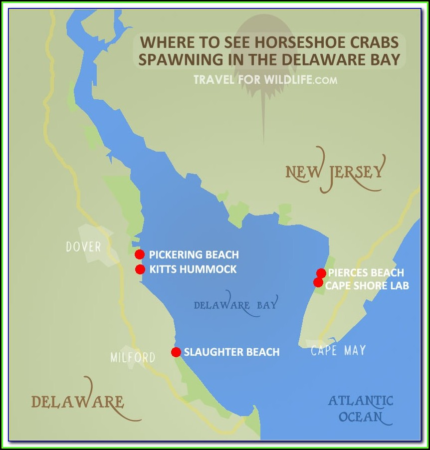 Map Of Shipwrecks In Delaware Bay